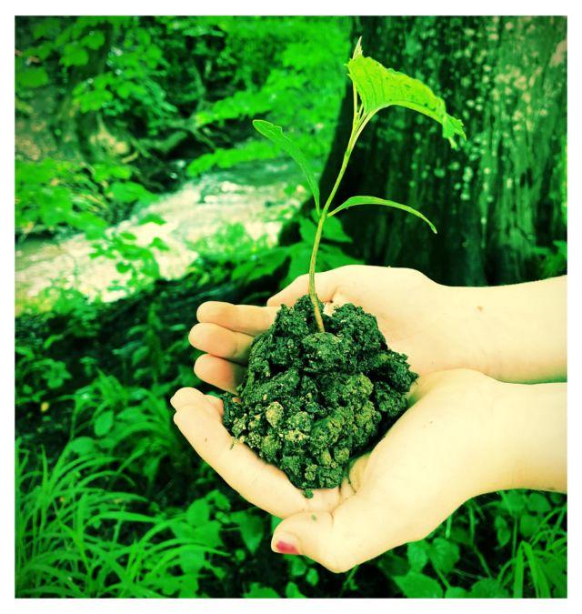bild umwelt pflanze hand final